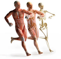 Health Promotion in the Aging Population IV - The Musculoskeletal System